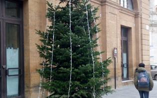 Caltanissetta, l'albero Pucciolo risponde a chi lo ha offeso:
