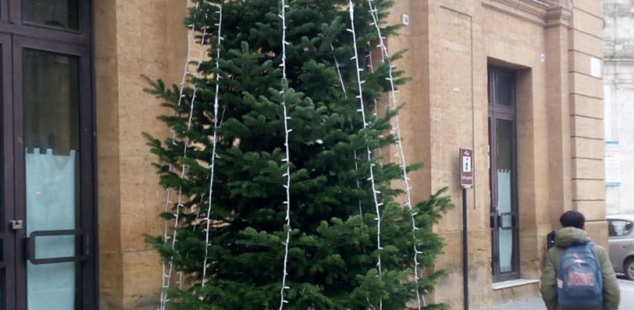 """Caltanissetta, l'albero Pucciolo risponde a chi lo ha offeso: """"Ho impiegato 15 anni per raggiungere i 4.5 metri di altezza e posso essere ripiantato"""""""
