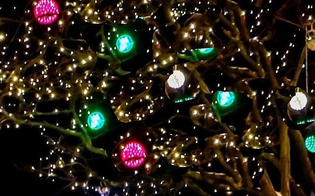 http://www.seguonews.it/a-caltanissetta-luminarie-a-partire-dall8-dicembre-come-da-tradizione-lassessore-tornatore-ecco-le-novita