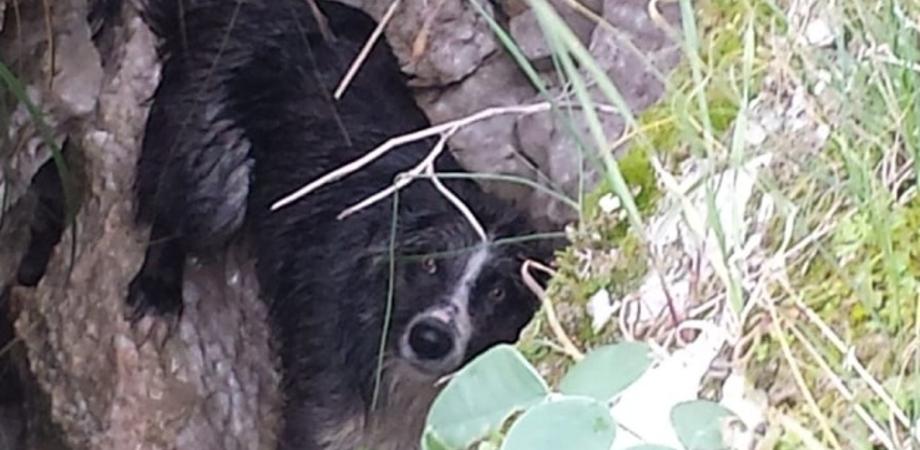 Sutera, cade in una scarpata mentre conduceva il gregge: il cane Ugo salvato da carabinieri e vigili del fuoco