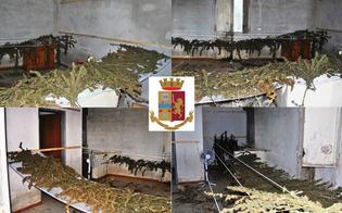 Sorpreso con 29 chili di marijuana: imprenditore agricolo di Niscemi arrestato dalla polizia