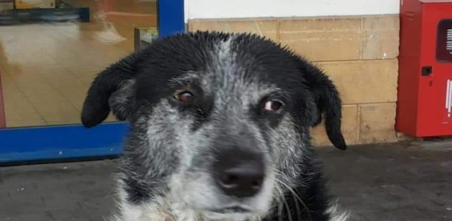 Caltanissetta, rischiava di finire in canile: è festa all'ospedale per il ritorno del cane Elia