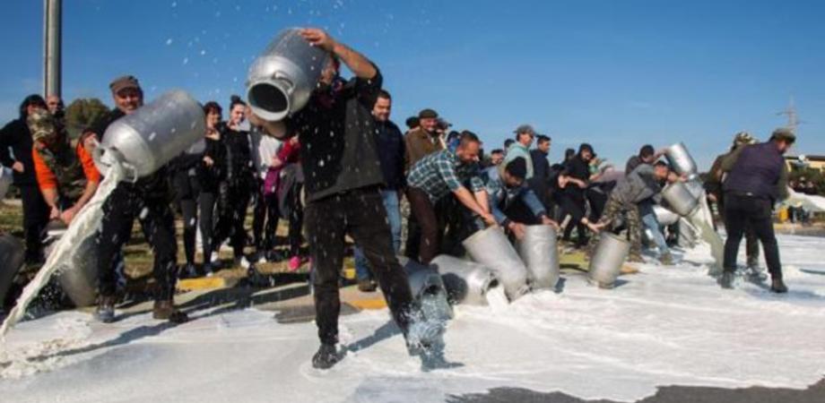 Protesta degli allevatori in provincia di Enna: sversati oltre 2 mila litri di latte