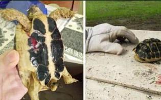 http://www.seguonews.it/ragazzini-giocano-a-calcio-ma-al-posto-del-pallone-usano-una-tartaruga