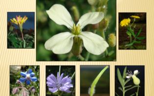 https://www.seguonews.it/a-caltanissetta-un-corso-per-riconoscere-le-erbe-e-verdure-selvatiche-commestibili