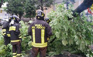 http://www.seguonews.it/maltempo-31-interventi-dei-vigili-del-fuoco-a-caltanissetta-albero-cade-in-viale-candura-traffico-in-tilt