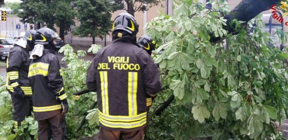 Maltempo, 31 interventi dei vigili del fuoco a Caltanissetta: albero cade in viale Candura. Traffico in tilt