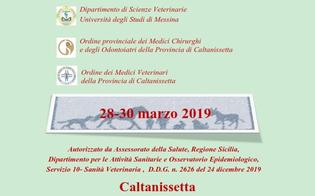 http://www.seguonews.it/caltanissetta-casa-famiglia-rosetta-al-via-il-corso-interventi-assistiti-con-gli-animali