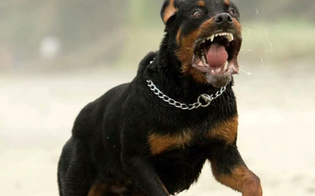 https://www.seguonews.it/caltanissetta-aggredito-dal-proprio-cane-non-riesce-a-rientrare-a-casa-e-chiama-la-polizia