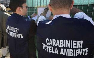 http://www.seguonews.it/caltanissetta-escrementi-di-piccioni-allinterno-di-unazienda-sequestrate-436-tonnellate-di-grano