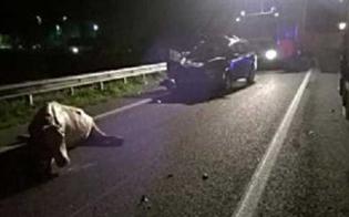 http://www.seguonews.it/auto-contro-mucca-sulla-strada-tra-gela-e-piazza-armerina-intera-famiglia-bloccata-conducente-in-ospedale