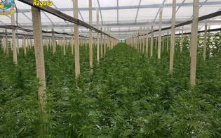 http://www.seguonews.it/scoperta-a-gela-una-piantagione-con-10-mila-piante-di-cannabis-arrestato-un-vittoriese