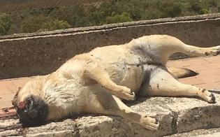 http://www.seguonews.it/caltanissetta-i-cittadini-indignati-sul-marciapiedi-che-porta-al-cimitero-la-carcassa-di-un-cane-scena-raccapricciante