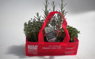 http://www.seguonews.it/le-erbe-aromatiche-di-aism-fine-settimana-dedicato-alla-raccolta-fondi-nelle-piazze-di-caltanissetta-gela-e-mazzarino