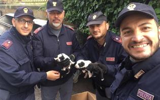 Caltanissetta, chiusi in un sacco nero e gettati tra i cassonetti: cuccioli salvati dalla polizia