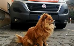 http://www.seguonews.it/mazzarino-da-tre-anni-aspettava-il-suo-padrone-e-morto-il-volpino-stefano