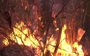 https://www.seguonews.it/gela-alberi-a-fuoco-in-centro-storico-residenti-escono-dalle-abitazioni