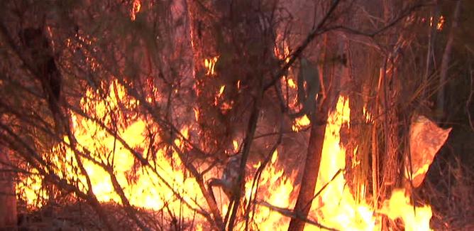 Gela, alberi a fuoco in centro storico: residenti fuori dalle abitazioni