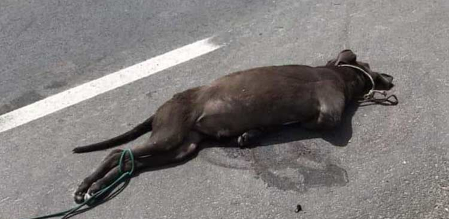 Barbara uccisione sulla Gela-Catania: cane legato ad un'auto e trascinato per metri