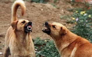 https://www.seguonews.it/gela-bagnante-aggredito-da-un-branco-di-cani-randagi-luomo-era-nella-spiaggia-di-montelungo