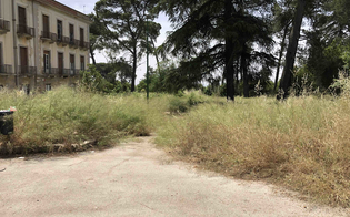http://www.seguonews.it/gli-ambientalisti-al-manager-dellasp-di-caltanissetta-il-dubini-nel-degrado-coperti-anche-gli-alberelli-piantati-dai-bambini