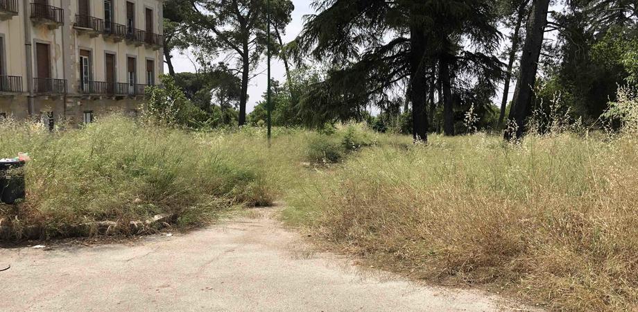 """Gli ambientalisti al manager dell'Asp di Caltanissetta: """"Il Dubini nel degrado. Coperti anche gli alberelli piantati dagli studenti"""""""