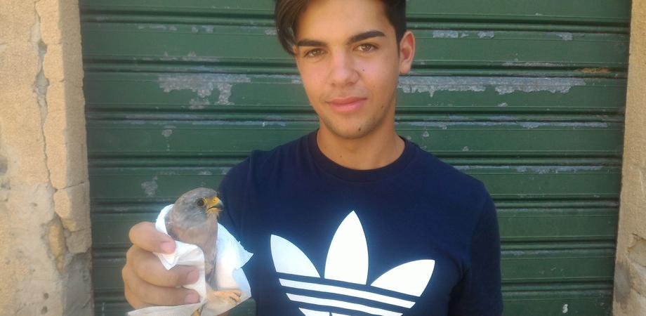 Falco grillaio ferito salvato dalle guardie del Wwf a Caltanissetta