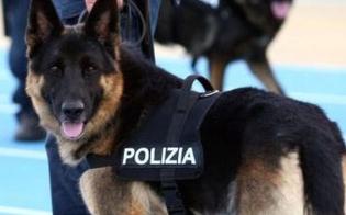 http://www.seguonews.it/caltanissetta-cocaina-hashish-e-marijuana-nascoste-nellaiuola-di-casa-23enne-nisseno-arrestato-dalla-polizia