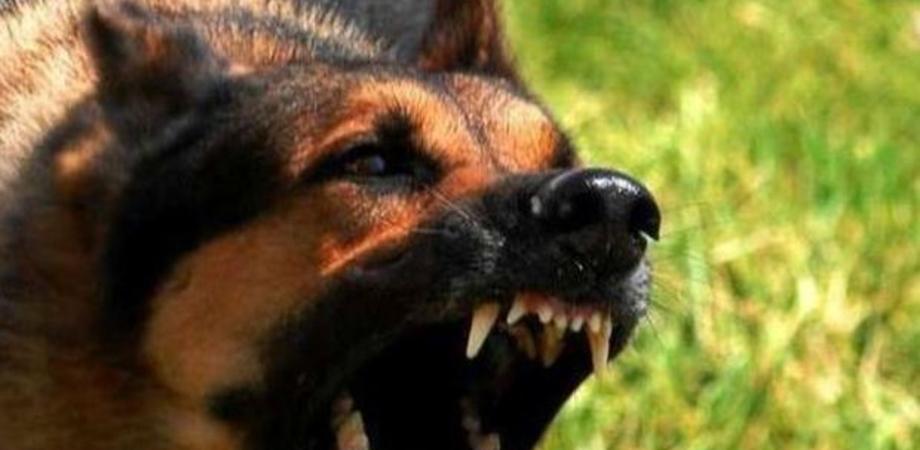Caltanissetta, morsa al mento da un cane randagio ragazzina finisce in ospedale