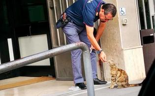 Poliziotto della questura di Caltanissetta sfama gatta incinta: Matteo Salvini posta la foto su facebook