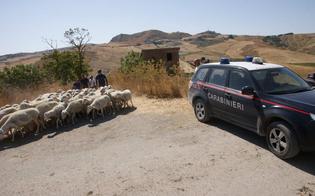http://www.seguonews.it/capi-di-bestiame-di-origine-sospetta-in-due-aziende-agricole-i-carabinieri-di-caltanissetta-confiscano-350-ovini-e-caprini