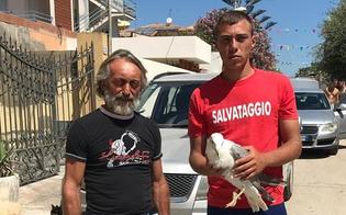 http://www.seguonews.it/gela-recuperato-un-gabbiano-reale-verra-trasferito-a-cattolica-per-essere-curato