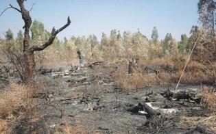 https://www.seguonews.it/a-niscemi-un-incendio-devasta-la-riserva-della-sughereta-paura-per-un-agriturismo
