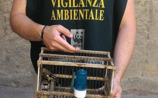http://www.seguonews.it/cardellino-tenuto-in-gabbia-al-cimitero-di-san-cataldo-liberato-dalle-guardie-del-wwf