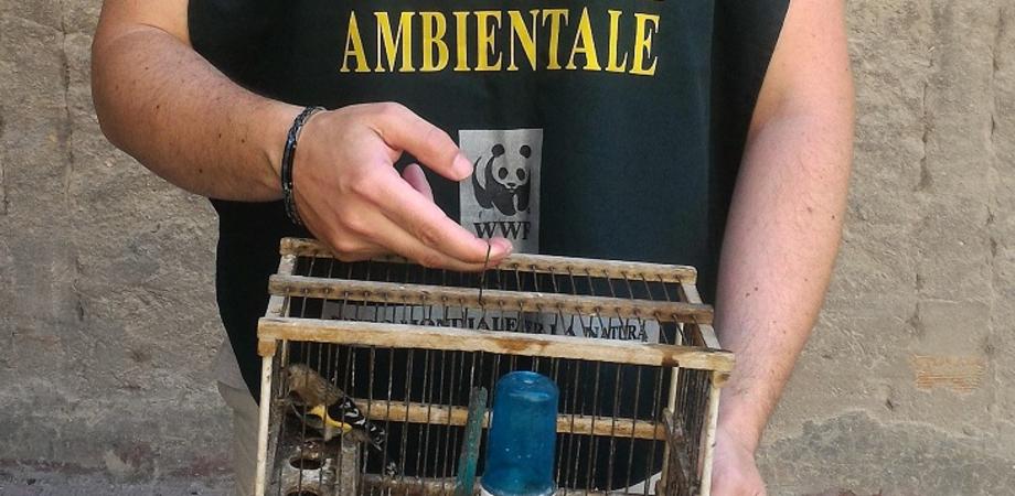 Cardellino tenuto in gabbia al cimitero di San Cataldo liberato dalle guardie del Wwf