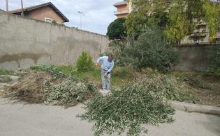 http://www.seguonews.it/interventi-di-pulizia-delle-aree-verdi-pubbliche-sopralluogo-del-sindaco-di-gela-