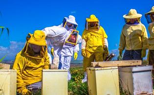 http://www.seguonews.it/al-via-a-caltanissetta-un-corso-pratico-di-apicoltura-si-terra-nella-fattoria-didattica-torrettella