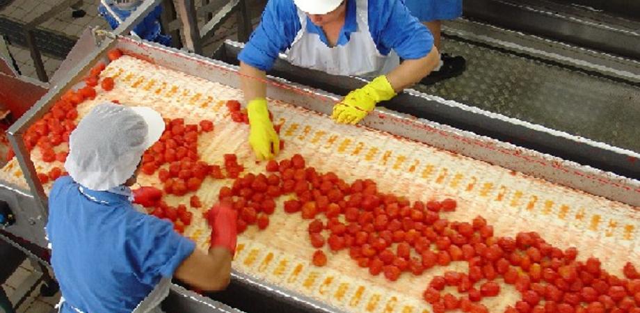 La Sicilia è la prima regione in Italia nell'industria alimentare, a Caltanissetta le aziende sono 443
