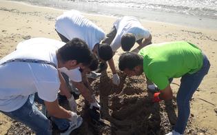http://www.seguonews.it/copertoni-plastica-vetro-e-residui-elettronici-i-ragazzi-della-cooperativa-arcobaleno-2013-di-sommatino-ripuliscono-la-baia-maddalusa-di-san-leone