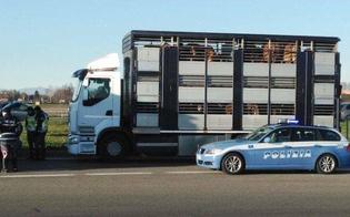 http://www.seguonews.it/caltanissetta-trasportava-bovini-in-maniera-irregolare-elevate-sanzioni-per-7500