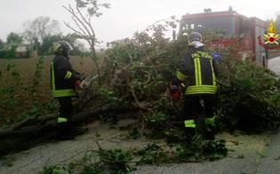 Maltempo a Caltanissetta. Alberi e cornicioni crollati, auto danneggiate, frane e abitazioni allagate: oltre 70 gli interventi dei vigili del fuoco