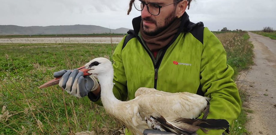 Gela, messa in salvo una cicogna bianca: era ferita a causa di una collisione contro i cavi elettrici