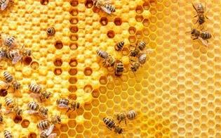 https://www.seguonews.it/apicoltura-lallarme-m5s-sicilia-terza-regione-per-numero-di-aziende-ma-servono-buone-pratiche-a-protezione-delle-api