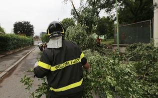 Alberi spezzati e pali pericolanti: decine gli interventi in provincia di Caltanissetta