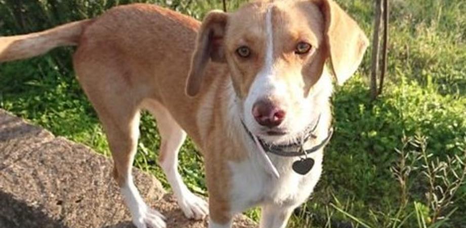 """""""Aiutateci a ritrovare Leyda"""", a Caltanissetta Paola cerca la sua cagnolina che si è smarrita in contrada Santa Lucia"""