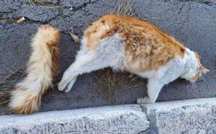 http://www.seguonews.it/gatto-imbottito-di-petardi-e-fatto-esplodere-la-vigilia-di-capodanno-la-foto-shock-commuove-il-web