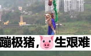 http://www.seguonews.it/video-choc-in-cina-maiale-lanciato-con-il-bungee-jumpning-per-inaugurare-parco-il-povero-animale-urla-tutto-il-tempo