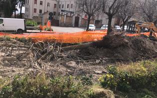 https://www.seguonews.it/a-san-cataldo-alberi-di-tiglio-abbattuti-per-effettuare-gli-scavi-di-caltaqua-la-denuncia-del-wwf