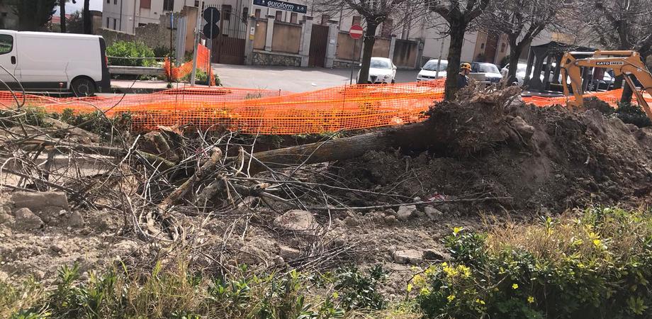 A San Cataldo alberi di tiglio abbattuti per effettuare gli scavi di Caltaqua: la denuncia del Wwf