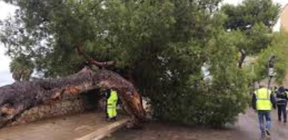 Paura sulla provinciale Delia - Caltanissetta: a causa del vento albero cade su un pullman di pendolari